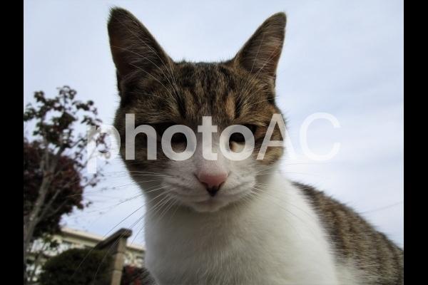 こちらを見る猫.jpg