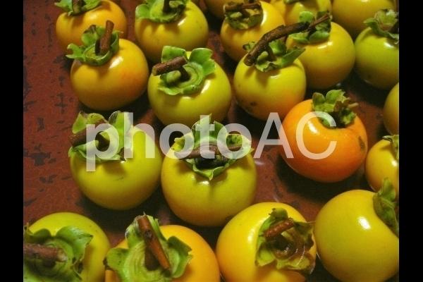 たくさんの柿.jpg