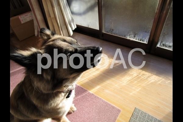 ウットリする犬.jpg