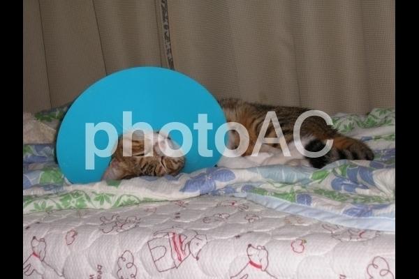 エリザベスカラーを付けた猫 2.jpg