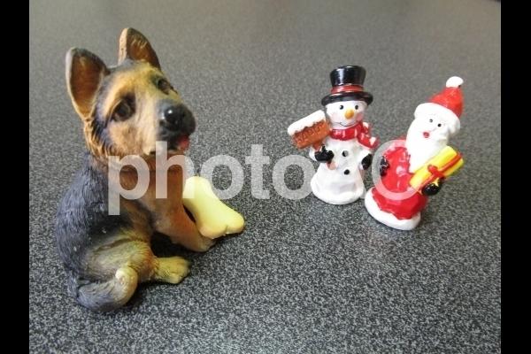 クリスマスプレゼントを貰う犬.jpg