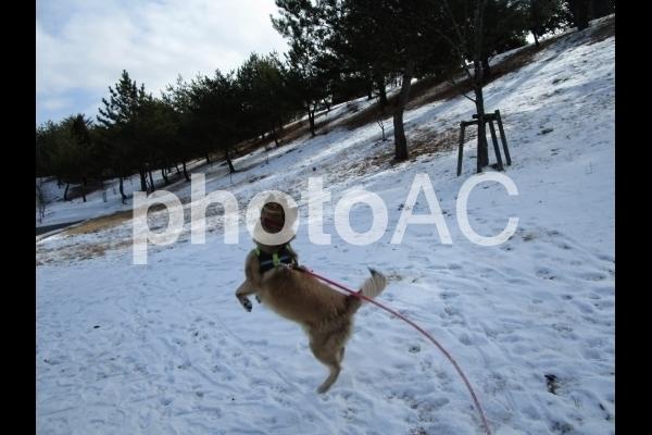 ジャンプする犬.jpg