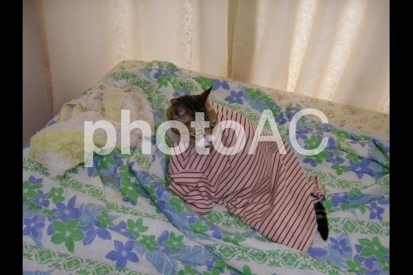パジャマを羽織った猫.jpg