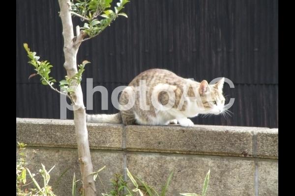 塀の上の猫.jpg