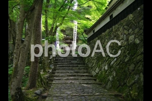 境内の階段.jpg