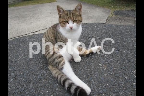 寛ぐ猫.jpg