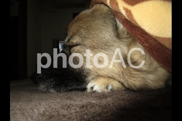寝る犬.jpg