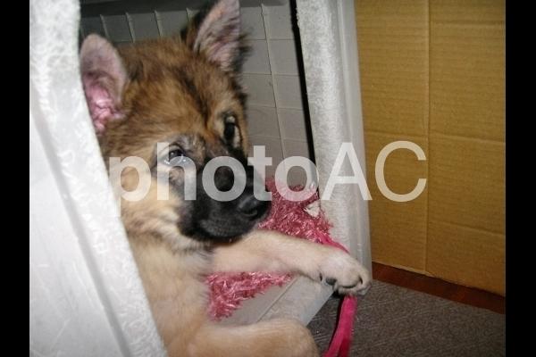 小屋に入る子犬.jpg