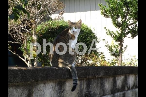 振り向く猫.jpg