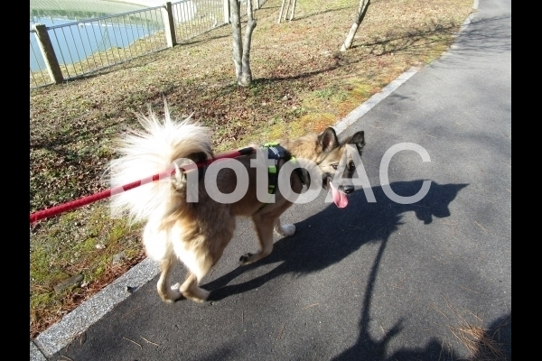 散歩中の愛犬.jpg