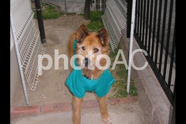 服を着た犬.jpg