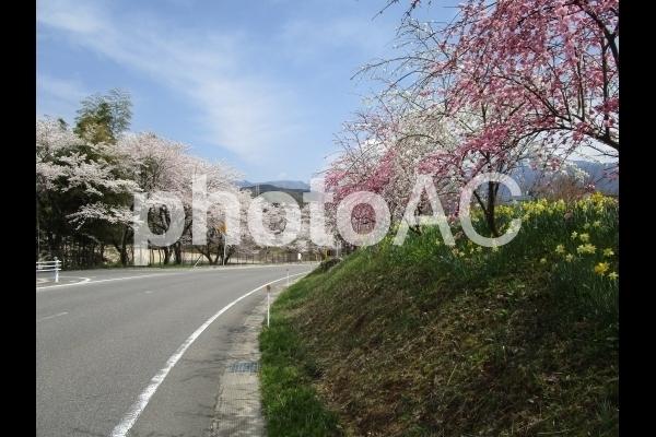 桃と桜の風景.jpg