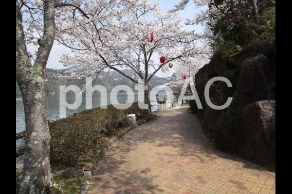 桜と提灯.jpg