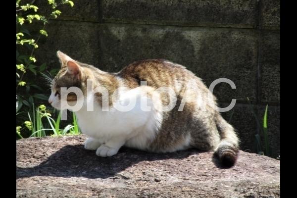 横向きの猫.jpg