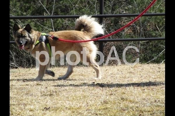 歩く犬.jpg