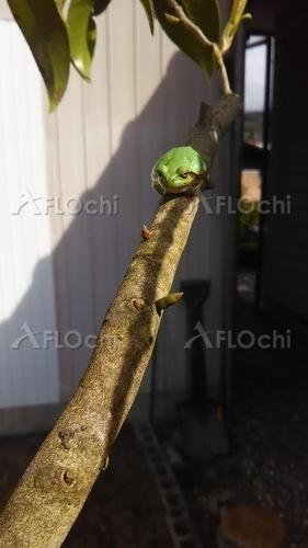 枝につかまるカエル.jpg