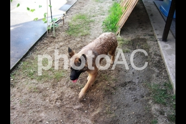 水遊びをする犬.jpg