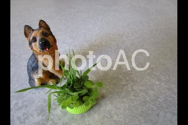 犬と草.jpg