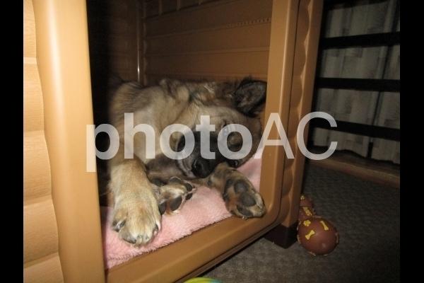 眠たい犬.jpg