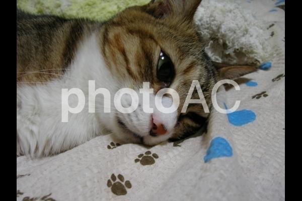 眠たい猫.jpg