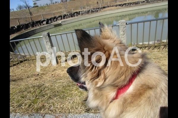 眺める犬.jpg