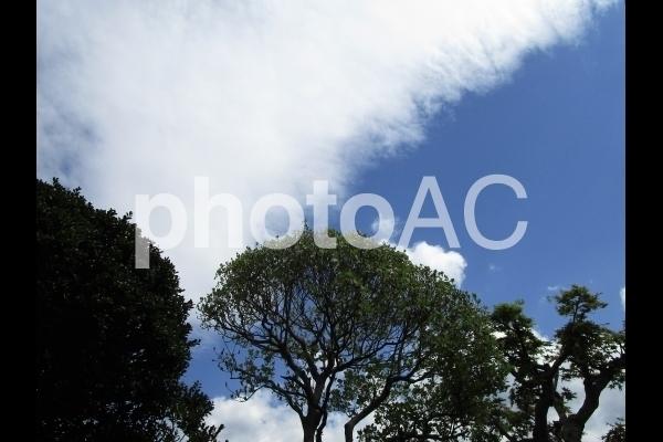 緑のある空.jpg