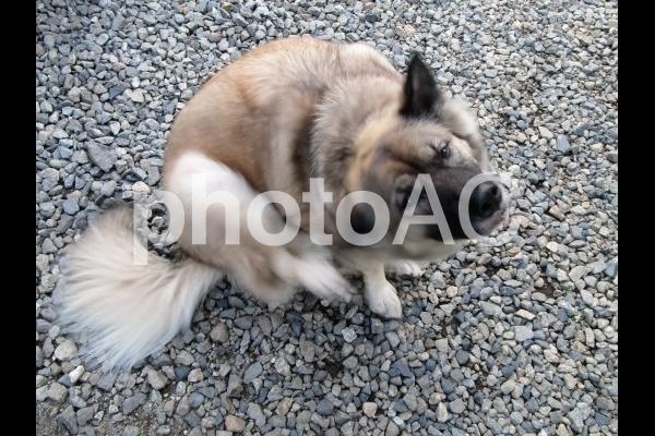 耳を掻く犬.jpg
