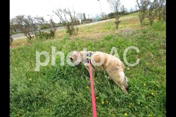 草むら犬.jpg