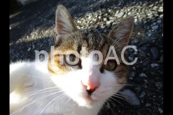 見つめる猫.jpg