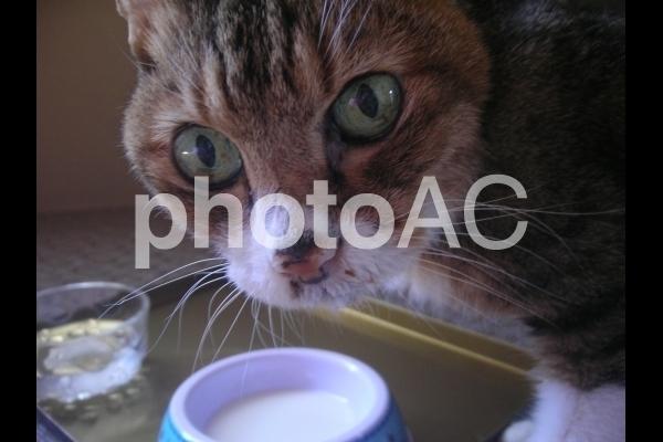 食事中の猫.jpg